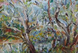 Currawongs in the Gums in the Afternoon Light by Celia Percival