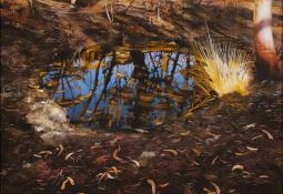 Bush Pool after Fire by Neil Taylor